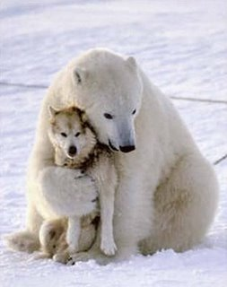 Polar-bear-funny-dog-death-hug