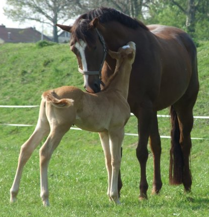 Facts on horses and foals, how to keep farm dogs from
