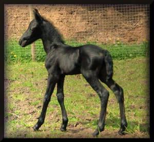 BabyXen.jpg.w300h277.jpg