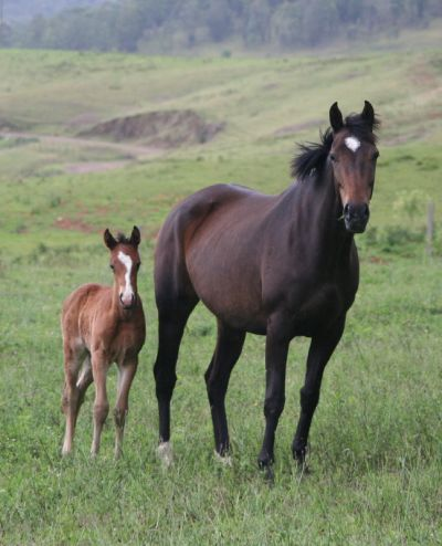 CountryMusic_Foal1