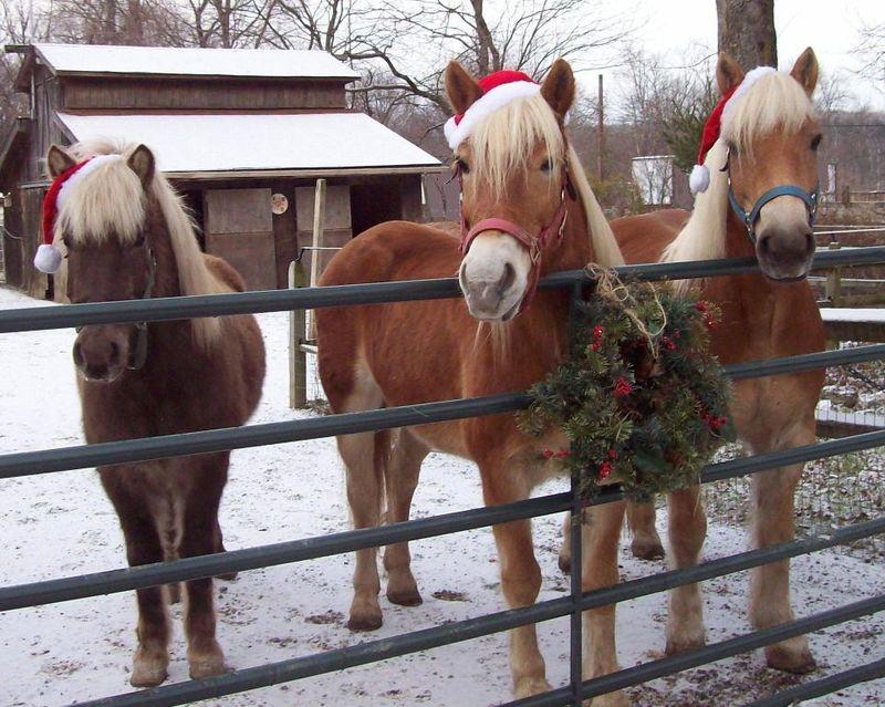 ChristmasHorses2