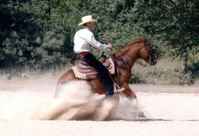 Acquarterhorses-wiz