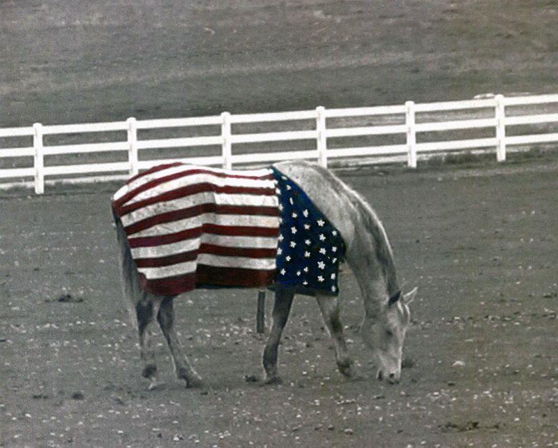 Patriotic_horse001